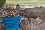8622 Deer
