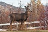 8629 Deer