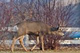 8638 Deer