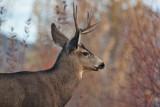 8631 Deer
