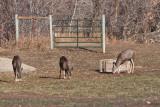 8651 Deer.jpg