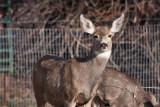 8652 Deer.jpg