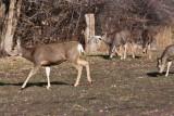 8658 Deer.jpg