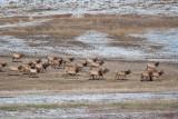 8694 Elk.jpg