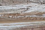 8695 Elk.jpg
