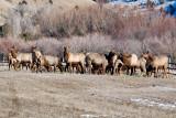 8697 Elk.jpg