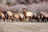 8698 Elk.jpg