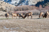 8699 Elk.jpg