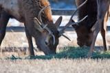 8700 Elk.jpg
