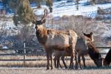 8703 Elk.jpg