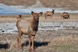 8704 Elk.jpg
