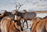 8705 Elk.jpg
