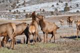 8706 Elk.jpg