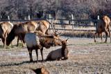 8708 Elk.jpg