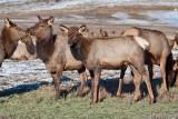 8709 Elk.jpg