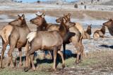 8710 Elk.jpg