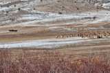 8714 Elk.jpg