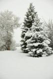 8717 Snow