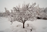 8730 Snow