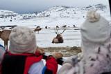 8777 Elk.jpg