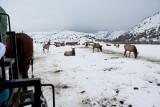 8778 Elk.jpg