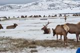 8779 Elk.jpg