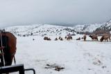 8780 Elk.jpg