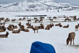 8781 Elk.jpg