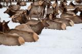 8789 Elk.jpg