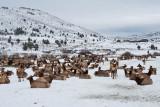 8790 Elk.jpg