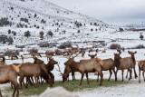 8793 Elk.jpg