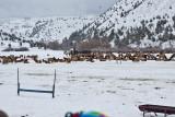 8794 Elk.jpg