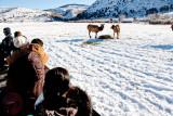 8830 Elk.jpg
