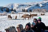 8834 Elk.jpg