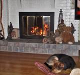 1018 Scruffy enjoying the fireplace