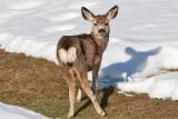 8861 Deer.jpg