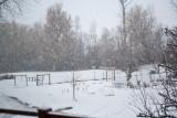 8865 Morning snow.jpg