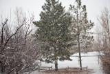 8864 Morning snow.jpg