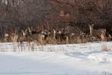 8877 Deer.jpg