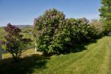 9119 Lilac 2.jpg