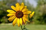9342 Macro flower.jpg