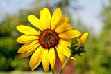 9341 Macro flower.jpg