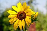9340 Macro flower.jpg