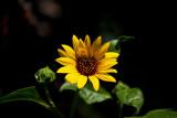 9334 Macro flower.jpg