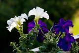 9328 Macro flower.jpg