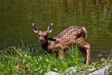 9357 Bambi