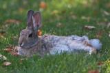 9706 Rabbit.jpg