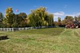 9709 My hay.jpg