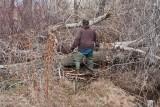 9963 Beaver.jpg