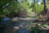0593 High water.jpg